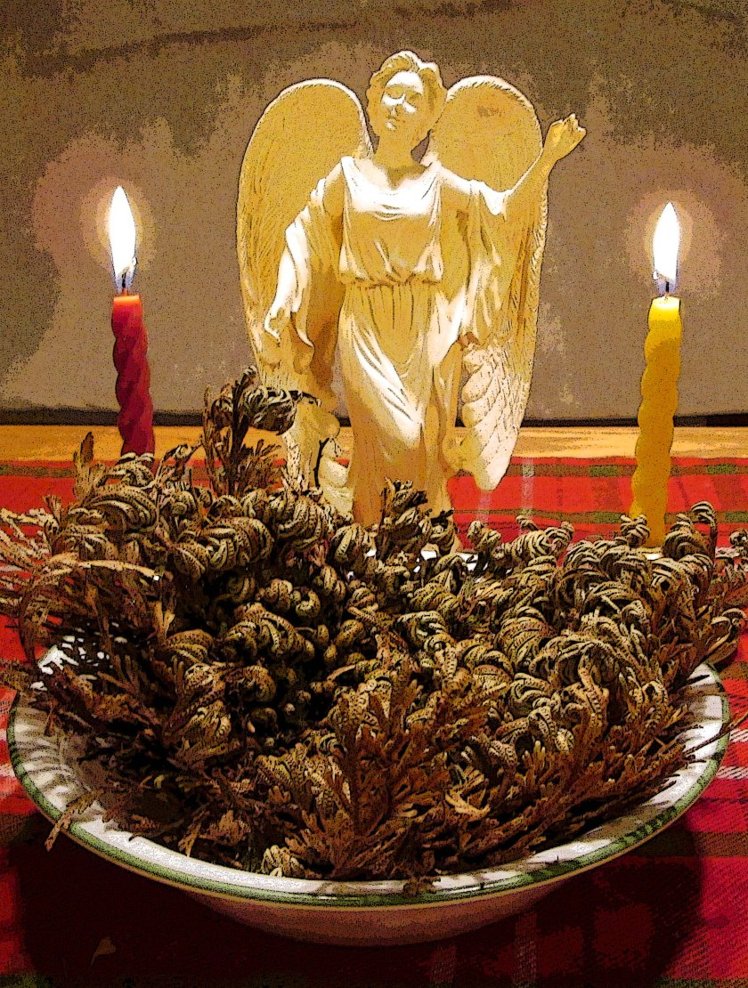 Full Moon Angel Working -- includes a red candle for Sagittarius and a yellow candle for Gemini. The focal herb center is a Rose of Jerico.  Placing the dried plant in water over Winter Solstice symbolizes the rebirth of the Sun and is thought to revitalize good fortune, healing, luck, and love in the home.